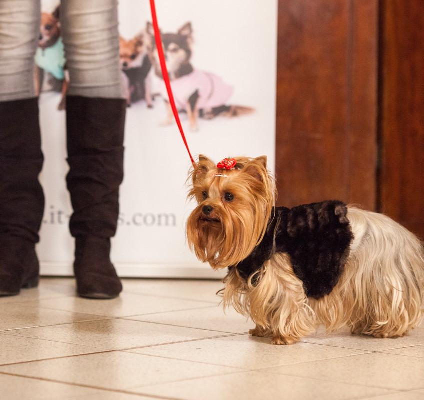 It-dogs-Natale2014-web-082