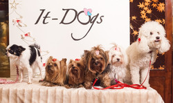 It-dogs-Natale2014-web-124.jpg