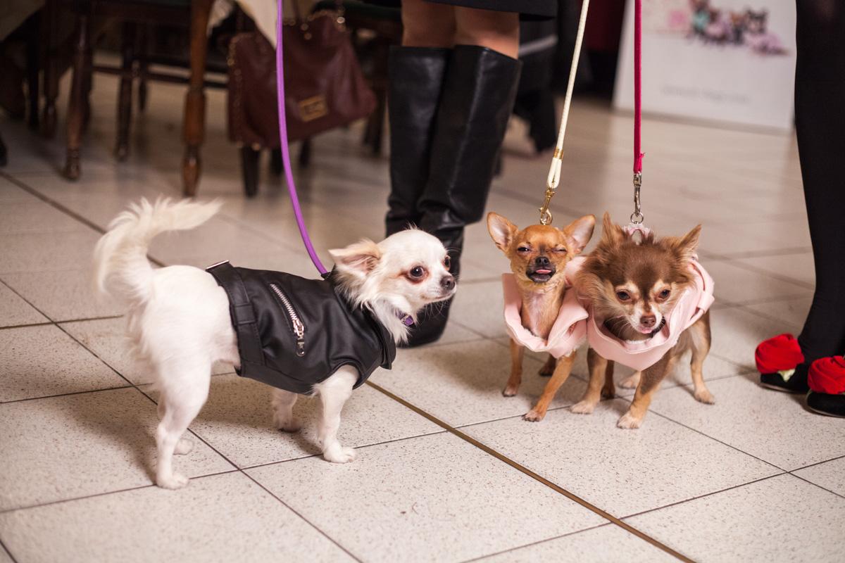 It-dogs-Natale2014-web-076.jpg