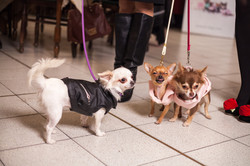 It-dogs-Natale2014-web-076.jpg