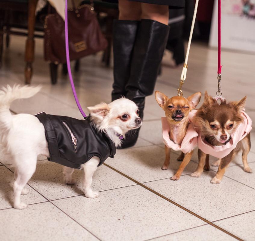 It-dogs-Natale2014-web-076