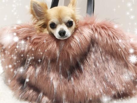 La Favola Furry Love!