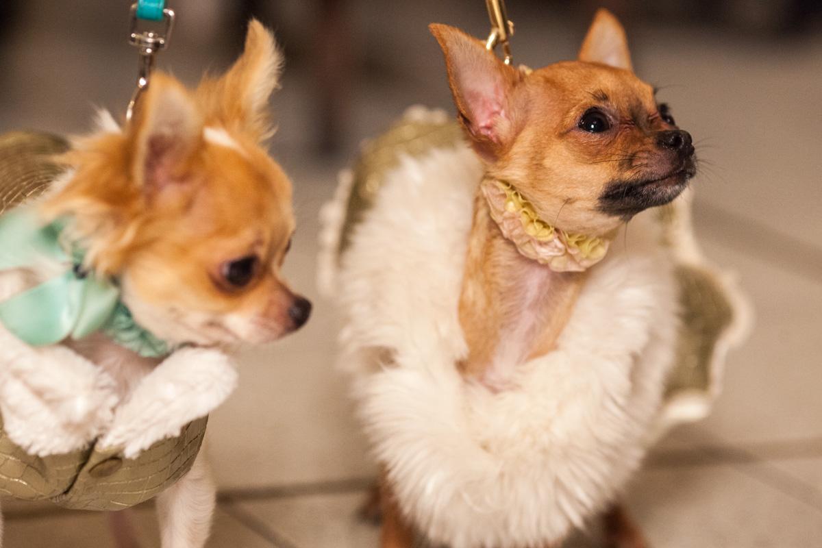 It-dogs-Natale2014-web-094.jpg
