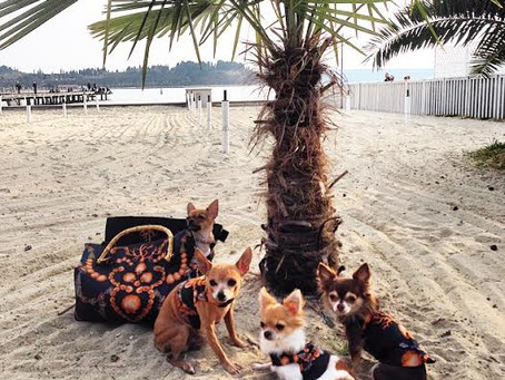 Very Important Dogs