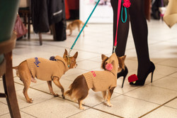 It-dogs-Natale2014-web-020.jpg