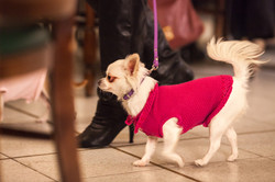 It-dogs-Natale2014-web-024.jpg