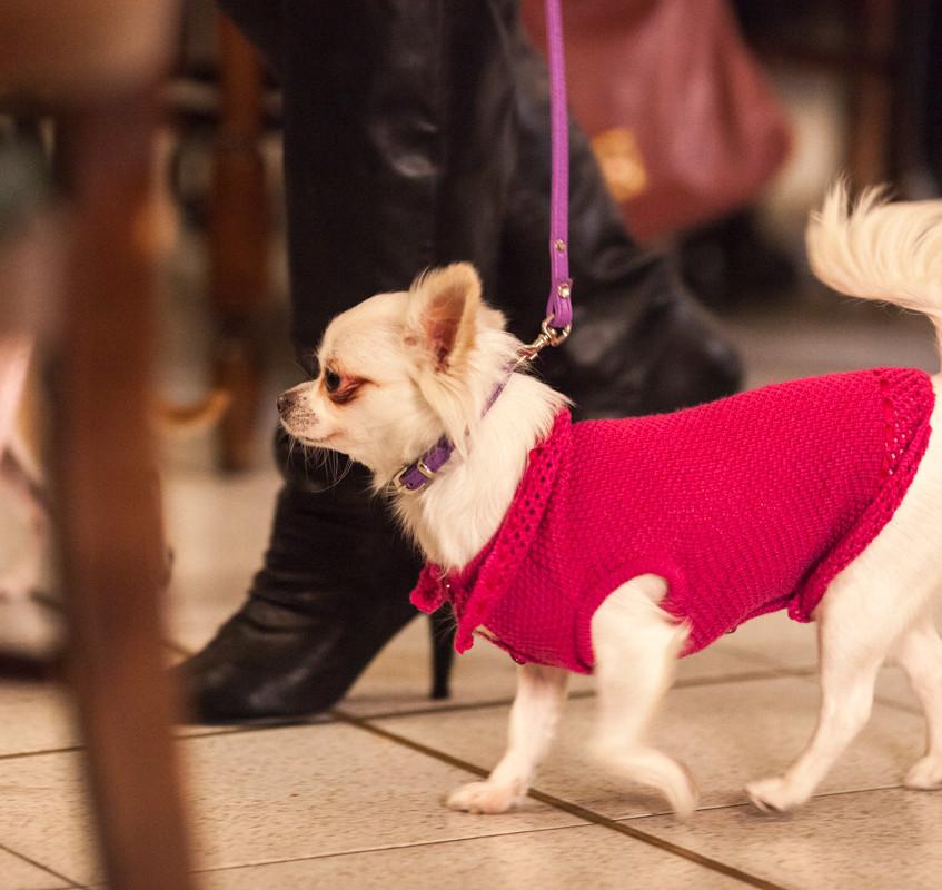 It-dogs-Natale2014-web-024