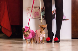 It-dogs-Natale2014-web-028.jpg