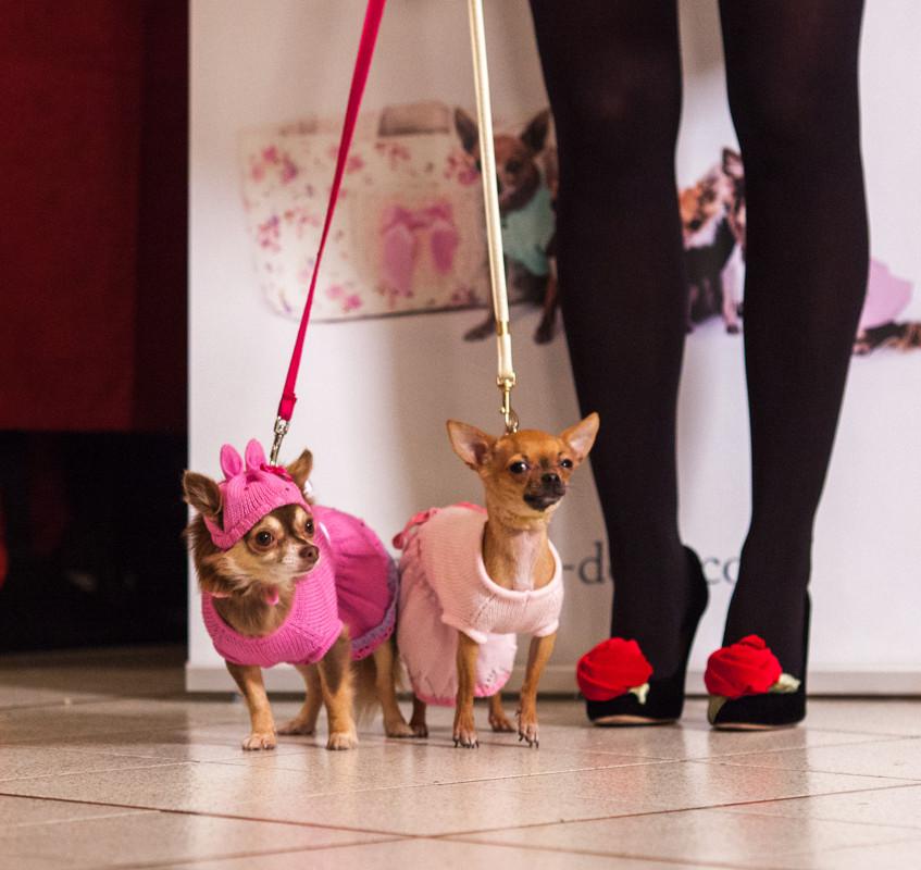 It-dogs-Natale2014-web-028