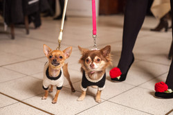 It-dogs-Natale2014-web-084.jpg