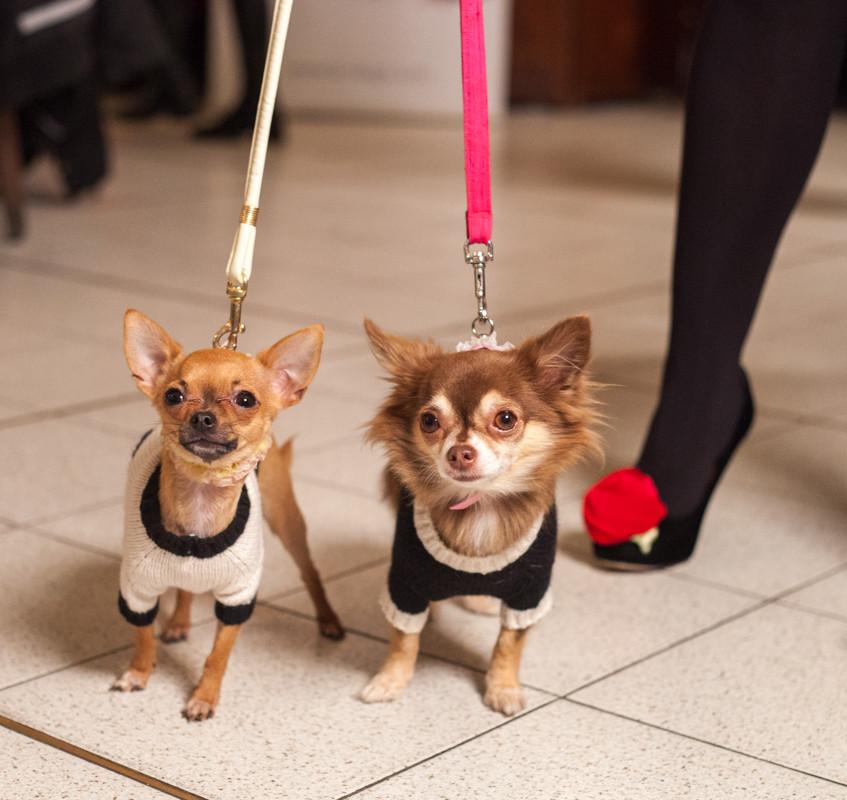 It-dogs-Natale2014-web-084