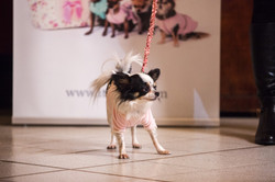 It-dogs-Natale2014-web-051.jpg