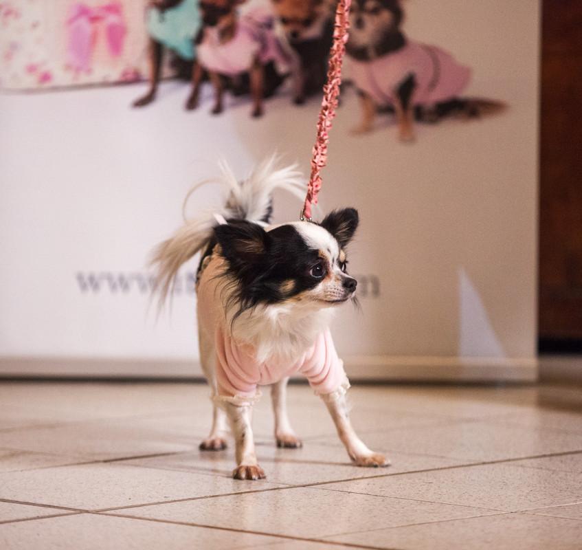 It-dogs-Natale2014-web-051
