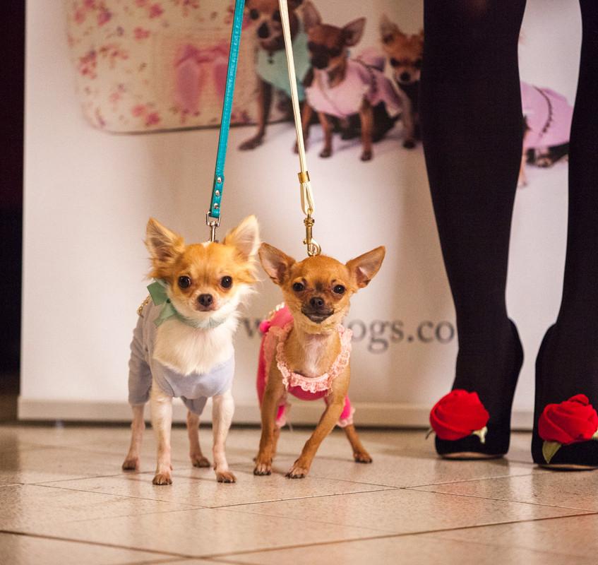 It-dogs-Natale2014-web-053