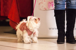 It-dogs-Natale2014-web-055.jpg