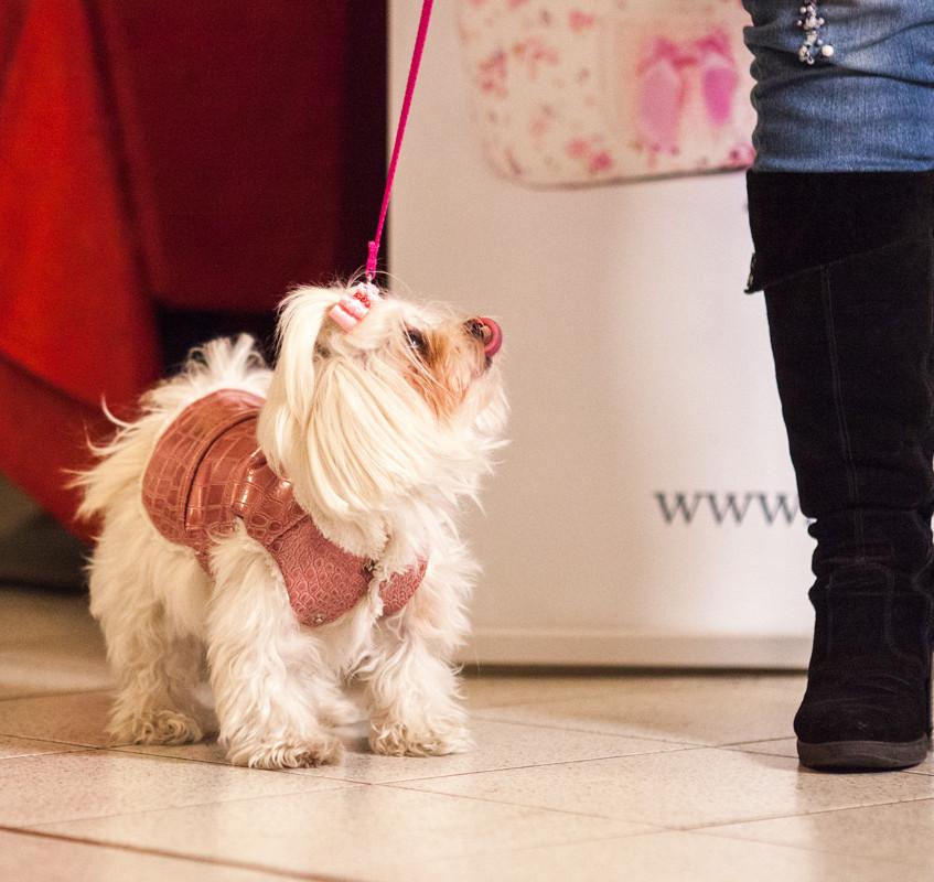 It-dogs-Natale2014-web-055