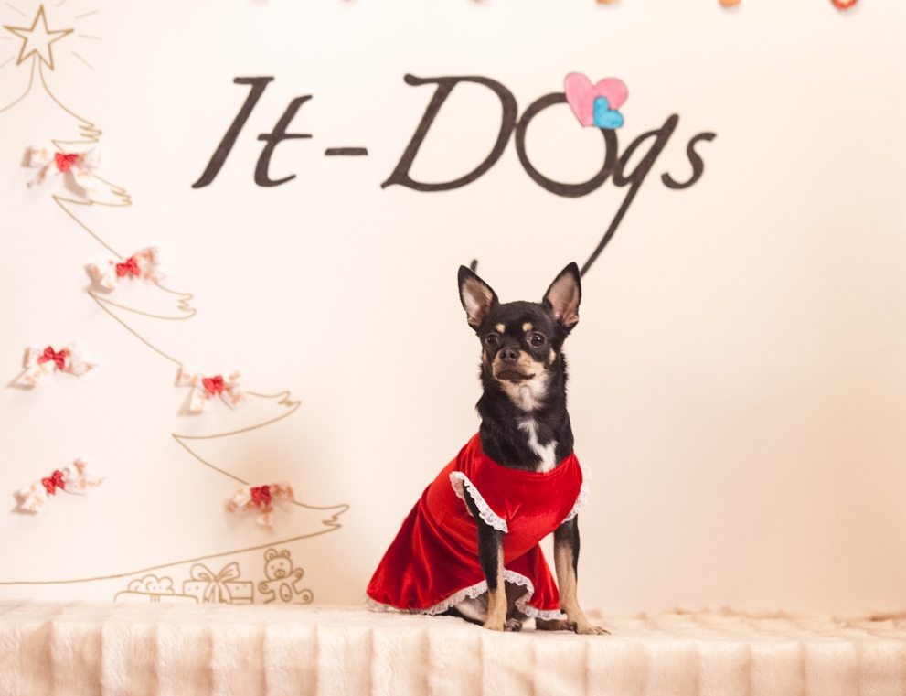 It-dogs-Natale2014-web-111.jpg