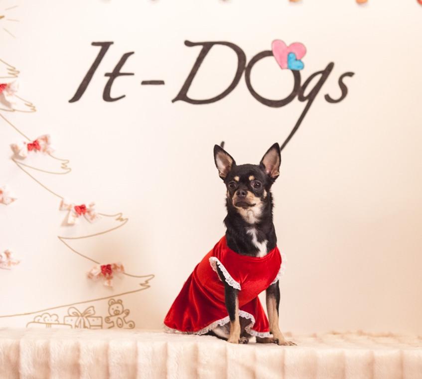 It-dogs-Natale2014-web-111