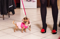 It-dogs-Natale2014-web-069.jpg