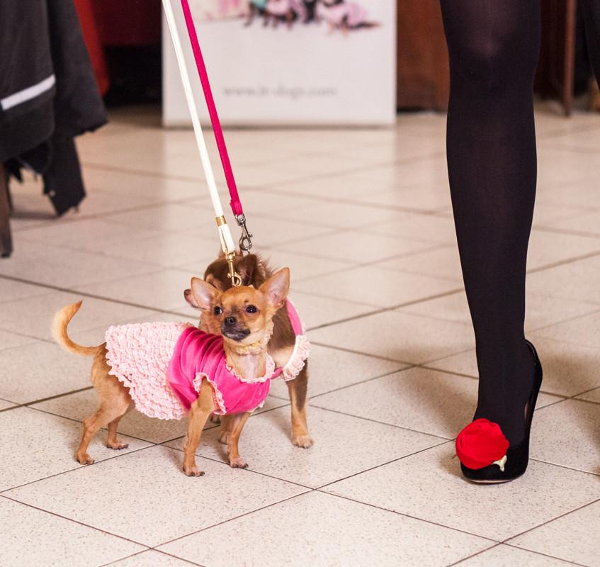 It-dogs-Natale2014-web-069