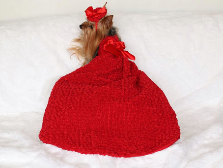 Portia&Rosie in It-Dogs Couture dress