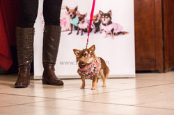 It-dogs-Natale2014-web-048.jpg