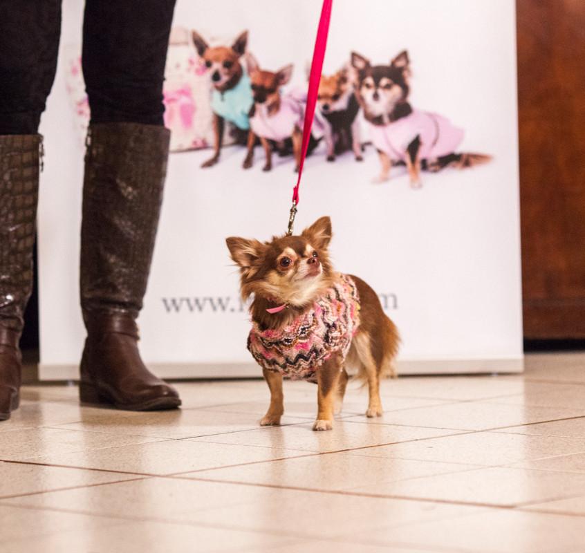 It-dogs-Natale2014-web-048