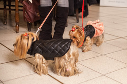 It-dogs-Natale2014-web-089.jpg