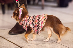 It-dogs-Natale2014-web-049.jpg