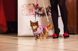 It-dogs-Natale2014-web-035.jpg