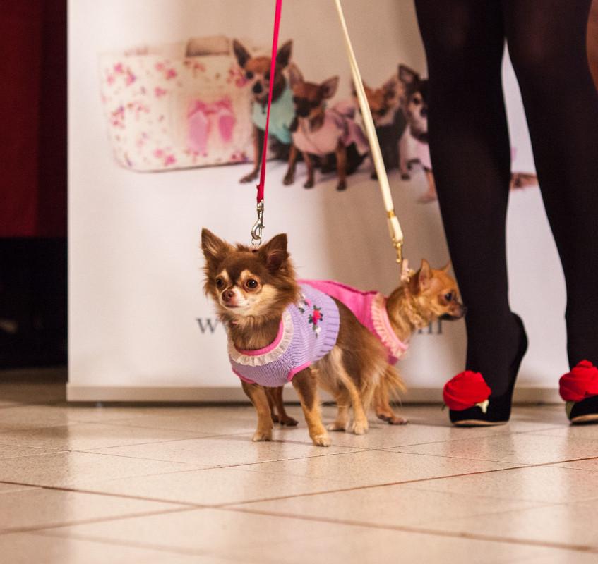 It-dogs-Natale2014-web-035