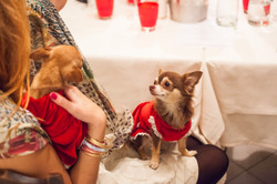 It-dogs-Natale2014-web-126.jpg