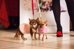 It-dogs-Natale2014-web-059.jpg
