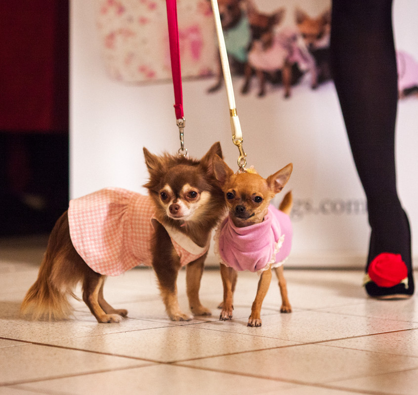 It-dogs-Natale2014-web-059