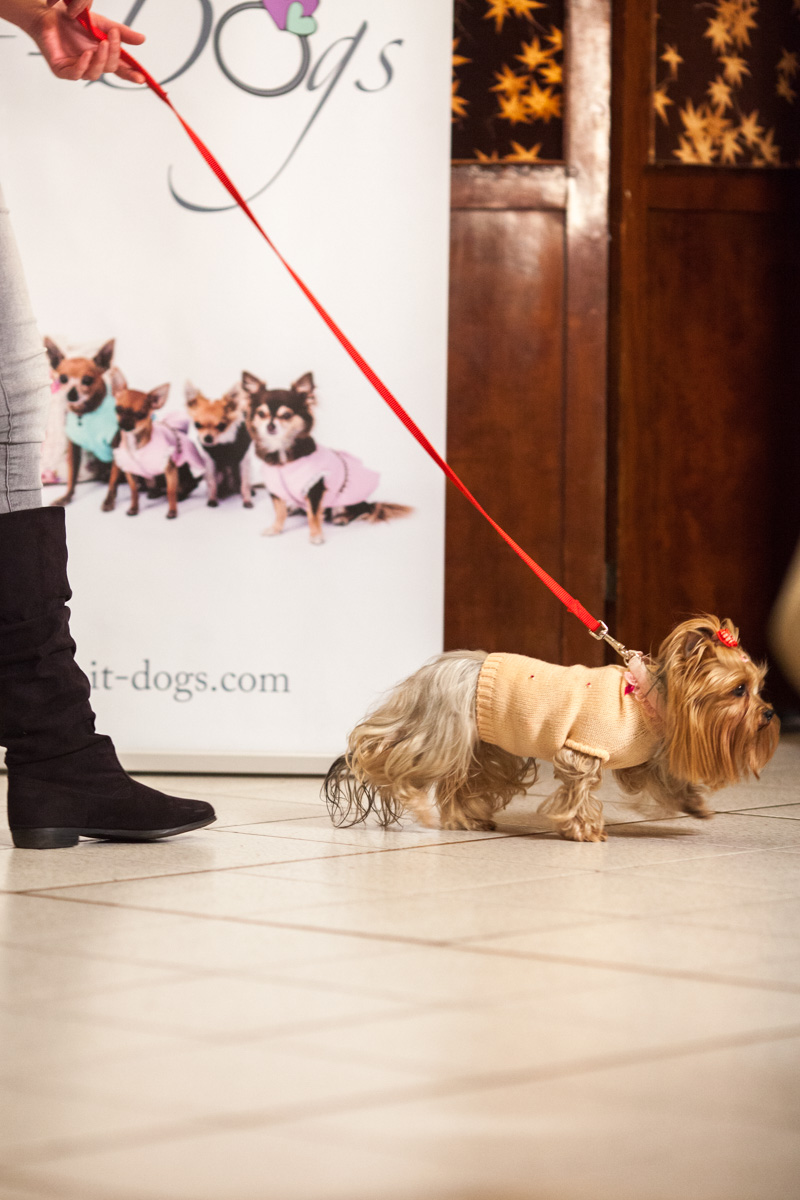 It-dogs-Natale2014-web-018.jpg
