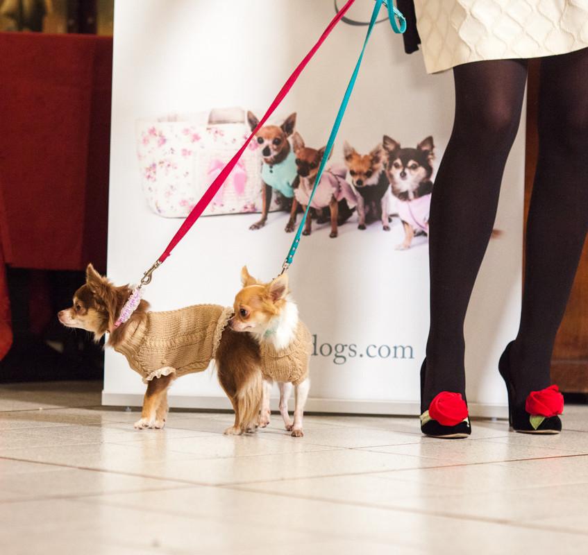 It-dogs-Natale2014-web-014