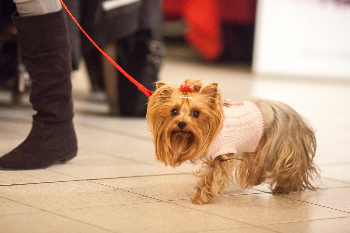 It-dogs-Natale2014-web-026.jpg