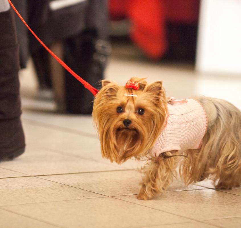 It-dogs-Natale2014-web-026
