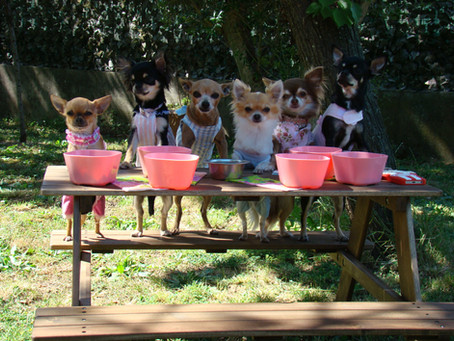 It-Dogs Picnic Party
