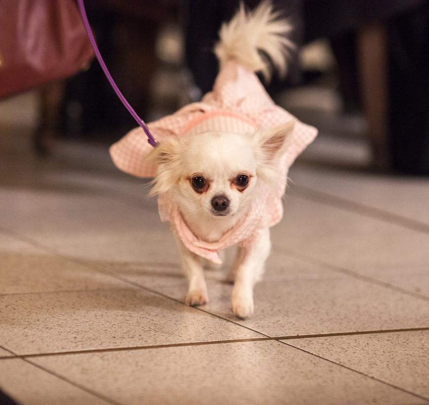It-dogs-Natale2014-web-045