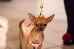 It-dogs-Natale2014-web-046.jpg