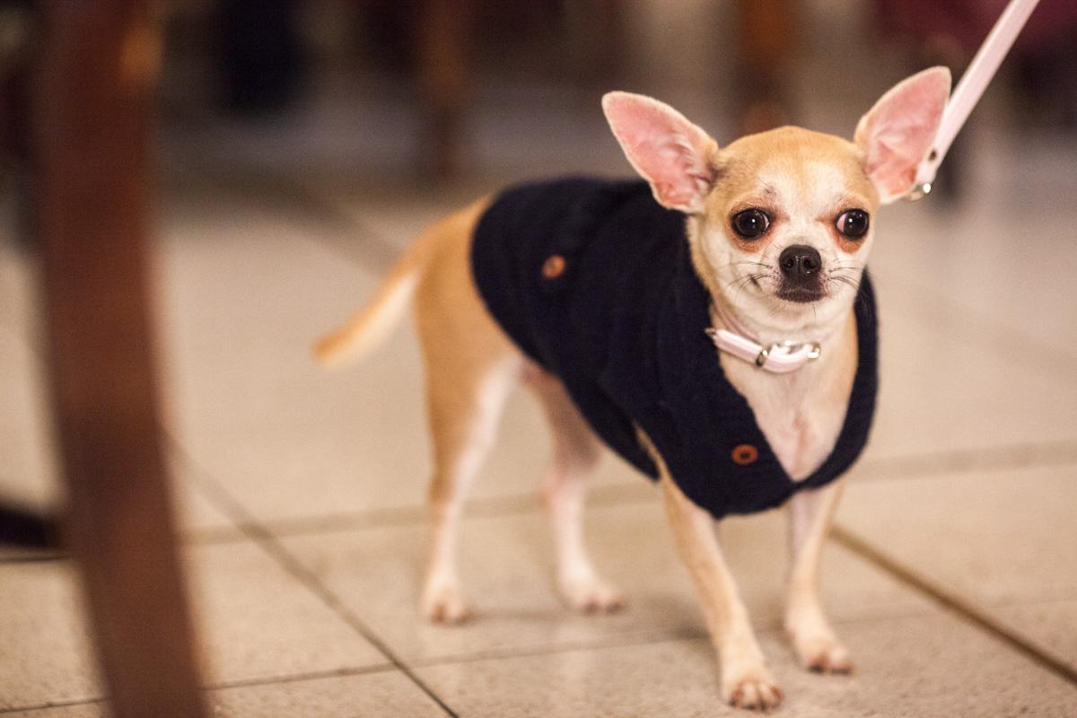 It-dogs-Natale2014-web-039.jpg