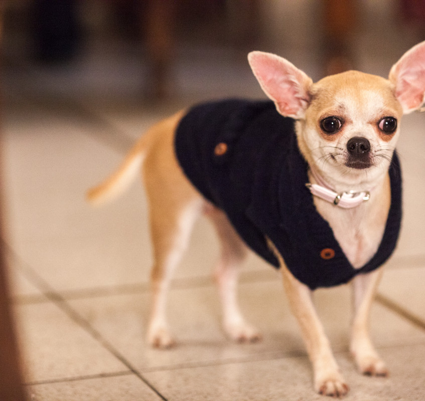 It-dogs-Natale2014-web-039