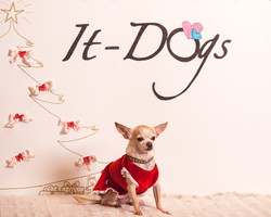 It-dogs-Natale2014-web-118.jpg
