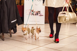 It-dogs-Natale2014-web-091.jpg