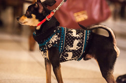 It-dogs-Natale2014-web-067.jpg