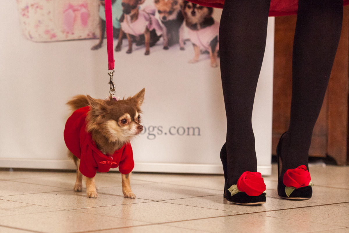 It-dogs-Natale2014-web-098.jpg