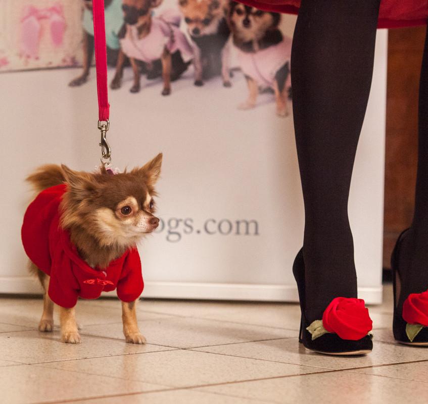 It-dogs-Natale2014-web-098