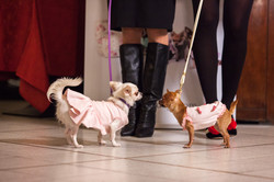 It-dogs-Natale2014-web-044.jpg