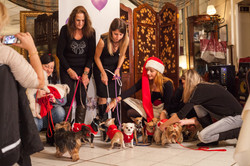 It-dogs-Natale2014-web-102.jpg